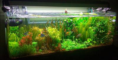оформление аквариума в коллекторском стиле