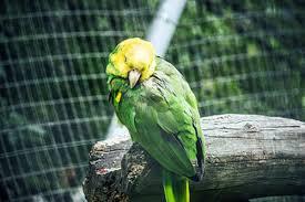 Отравление у декоративных птиц