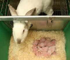 Вариант комфортного гнездового ящика для крольчихи