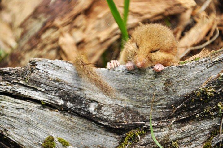 фотографии крошечных и забавных диких мышек (14)