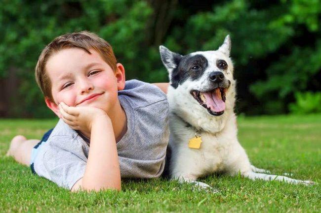 Перед тем, как раздумывать над тем, чем лечить лишай у собак, необходимо провести меры предосторожности. В первую очередь - оградить детей от контакта с животным