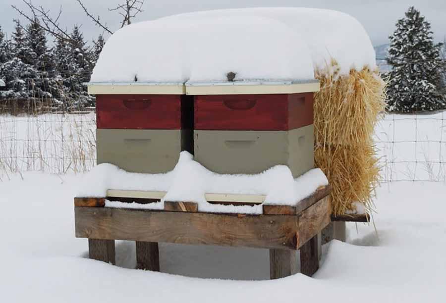 Пчелиные улья на снегу плотно прижаты друг к другу