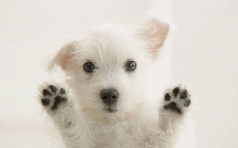 Любопытные факты о собаках