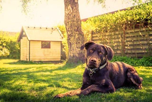 Подбирайте вольер и будку в нем исходя из размеров собаки