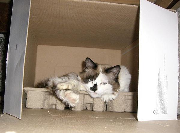 Как удобно спать в коробке коробка, кот