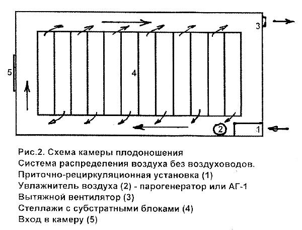 Схема камеры плодоношения