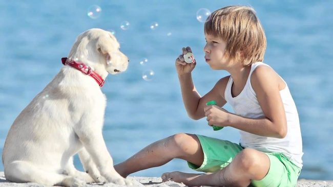 вои родители часто приходят с работы уставшими или обеспокоенными? Предложи завести собаку - мохнатый друг чувствует настроение человека и создает атмосферу приятного спокойствия