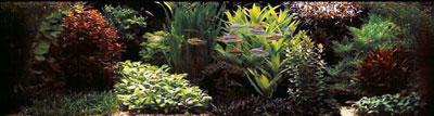 голладский аквариум