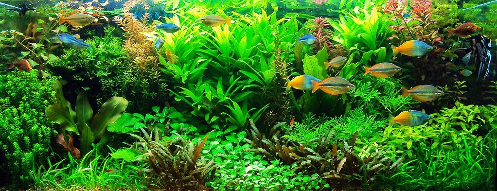 блог аквариумиста