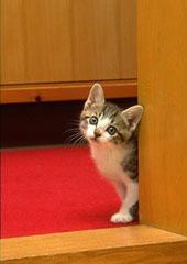 Что делать если кошка перестала ходить в лоток?