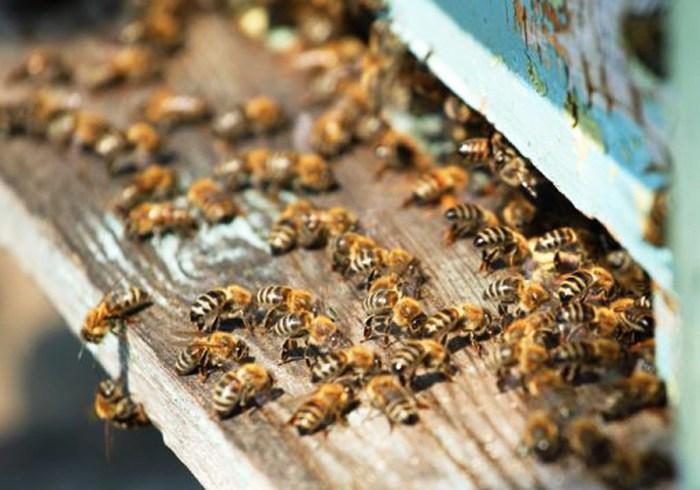 Картинки по запросу Слаженная работа опытного пчеловода на пасеке