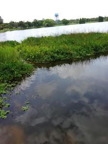 Хромис-красавец населяет небольшие ручьи и каналы.