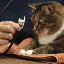 Ветеринар назначит лечение