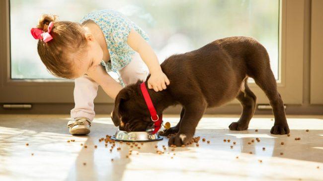 Корма для собак мелких пород обладают высоким процентом содержания линолевой кислоты и витаминов группы В, эти элементы поддерживают высокую энергичность маленьких псов