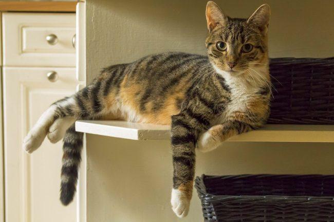 Заранее позаботьтесь о месте для родов. Кошке и будущим котятам должно быть там комфортно