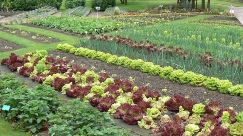 Грядки огорода своими руками фото