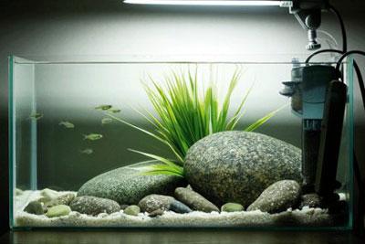 Добавляем рыбок в аквариум