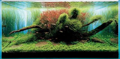 природный акваскейп