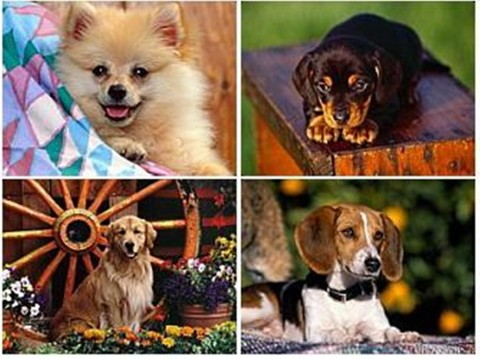 Топ-5 самых красивых пород собак