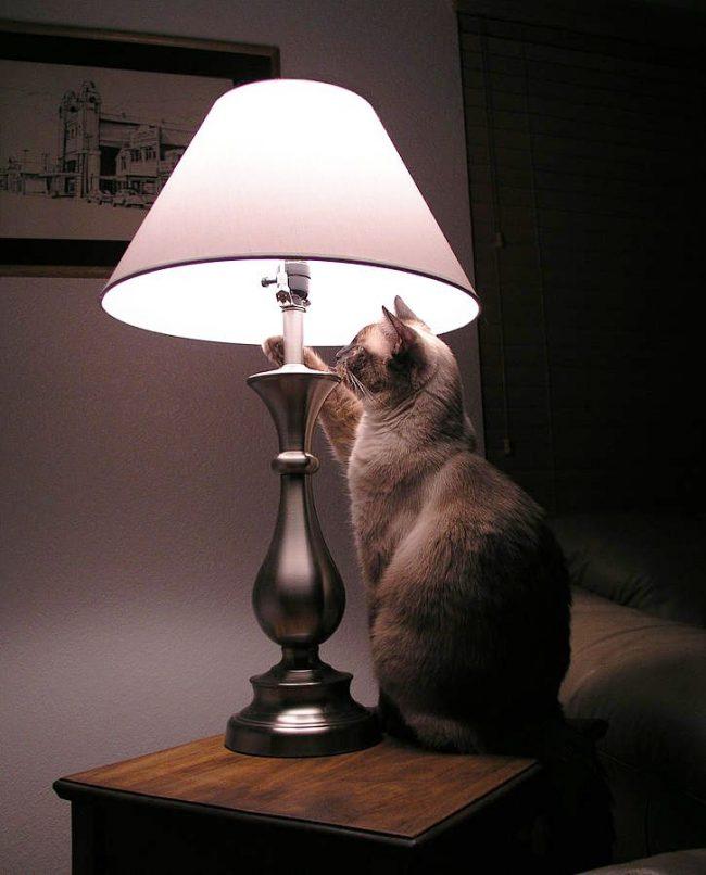 """""""Знают же, что я при свете не могу уснуть, и все равно забывают выключать на ночь светильник! Да как же он тут выключается..?"""""""
