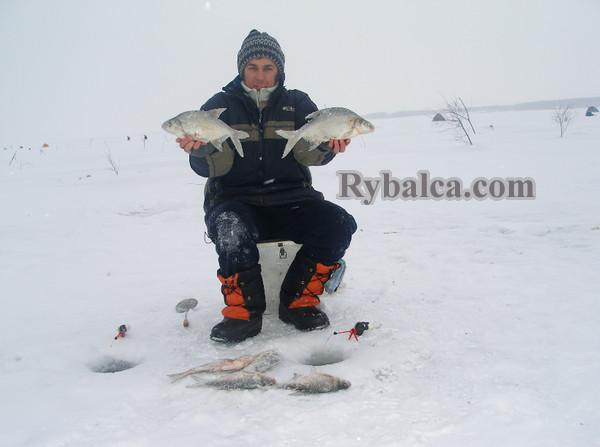 снасти прикормка рыбалка