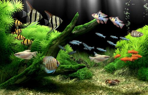 перенаселение аквариума