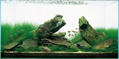 аквариум ивагуми