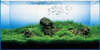 акваскейп ивагуми