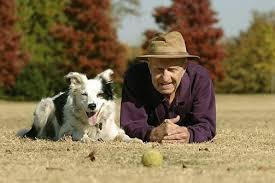 Картинки по запросу Уход за стареющей собакой