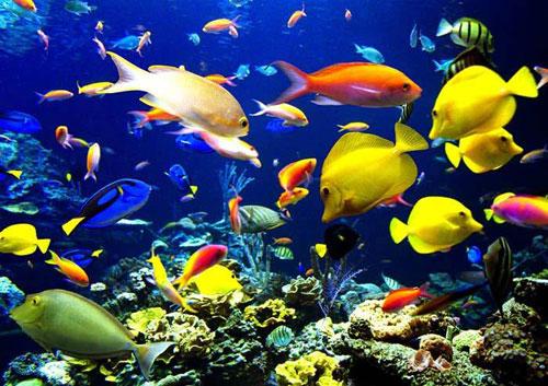 подбор рыбок для аквариума коммуналка