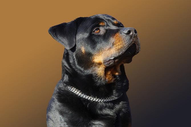 Рейтинг самых дорогих пород собак