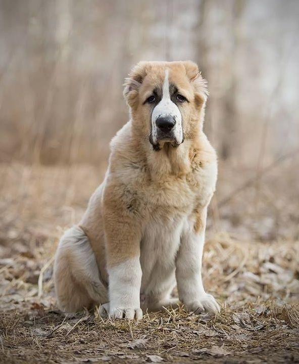 Эта порода считается одной из самых умных пород собак