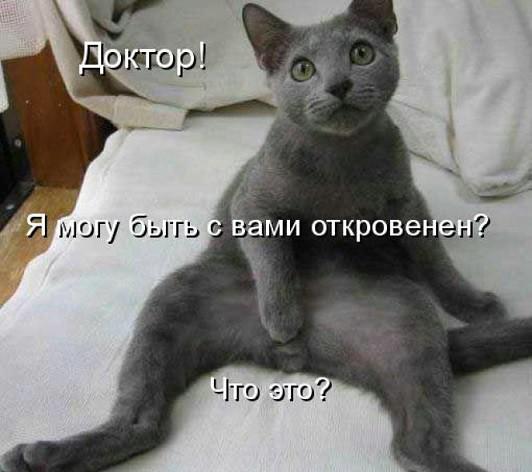 Стерилизация кошек и кастрация котов – зачем это нужно? кастрация, кот, стерилизация