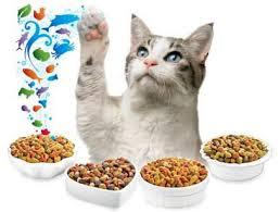 Выбор корма для кошки