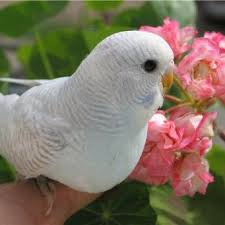 Некоторые домашние растения являются ядовитыми и опасными для здоровья птиц