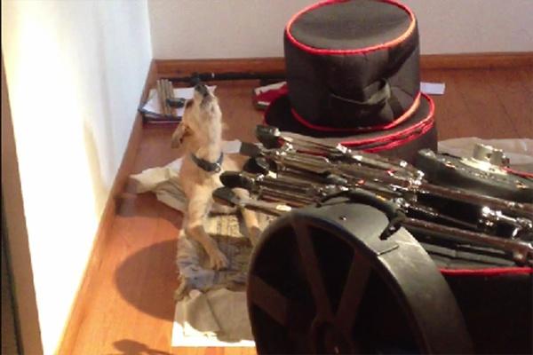 Собака, которая обожает петь блюз, взорвала Интернет