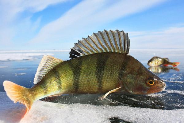рыбалка зимой, зимняя рыбалка, рыбалка по первому льду, рыбалка на льду