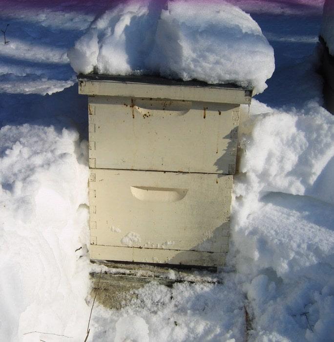Снег лежит на пчелином улье