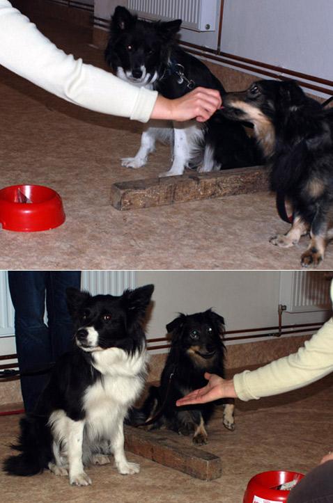 В прошлый  раз сосед получил вознаграждение, а этот пёс – нет. Видимо, теперь он  решил впустую силы не тратить (фото Friederike Range).