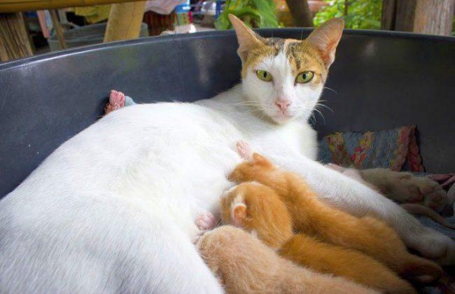 Познакомьте кошечку с родильным местом заранее. Если она откажется в нем обитать, дайте возможность произвести потомство в выбранном ею месте, а после все же переселите мамку с детками в подготовленные условия