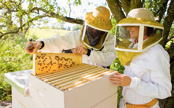 Два пчеловода осматривают рамки
