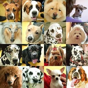 Картинки по запросу Какую собаку завести в квартире?