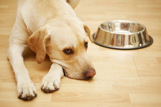Обнаружив у собаки понос, устройте ей полуголодную диету. Не кормите ее некоторое время, однако обеспечьте достаточным количеством воды
