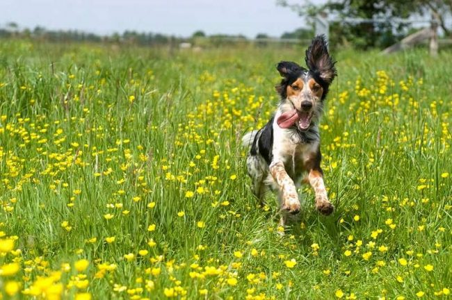 К группе риска с высокой вероятностью заразиться лишаем относятся щенки и старые собаки