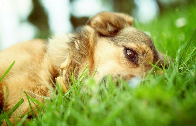 При обнаружении и удалении упыря надо внимательно наблюдать за поведением и состоянием собачки в течение от 3-х до 30 дней