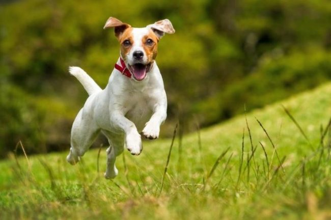 Выбирая клички для собак мальчиков, нужно помнить, что каждая из них имеет свое значение