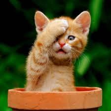 Следите за здоровьем котенка с детства