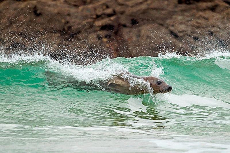 Эти волшебные млекопитающие-2012