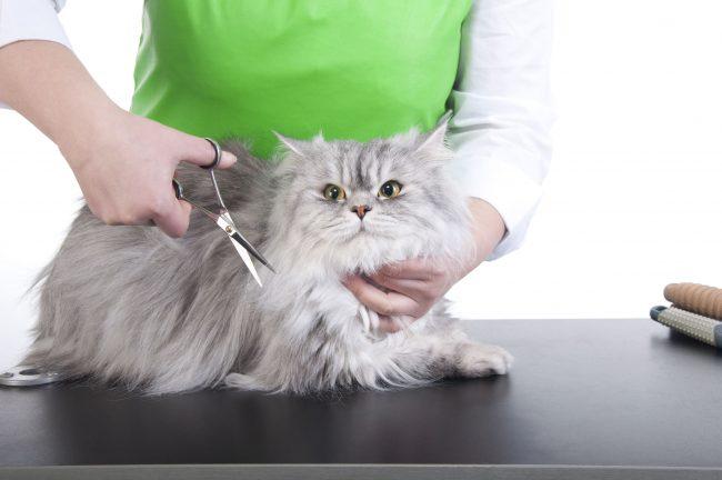 Груминг кошек на дому