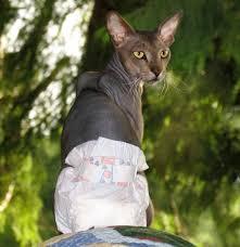 При возрастном недержании выходом может стать памперс для кошки